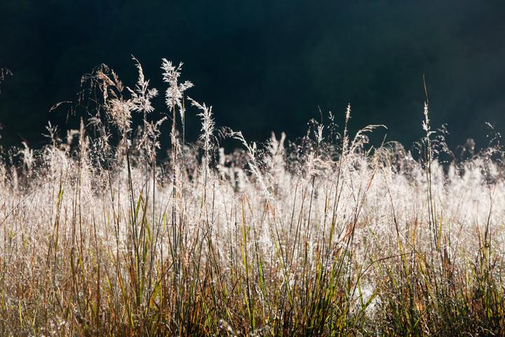 cades cove, grasses, fog, dew, photo