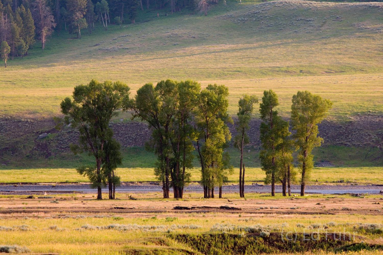 yellowstone, photos,, photo