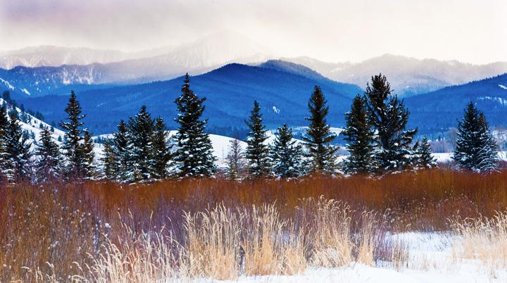 grasses, tetons, mountains, photo
