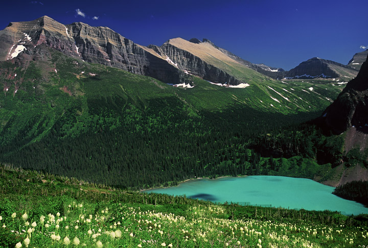 Grinnell Lake, beargrass, glacier, photo