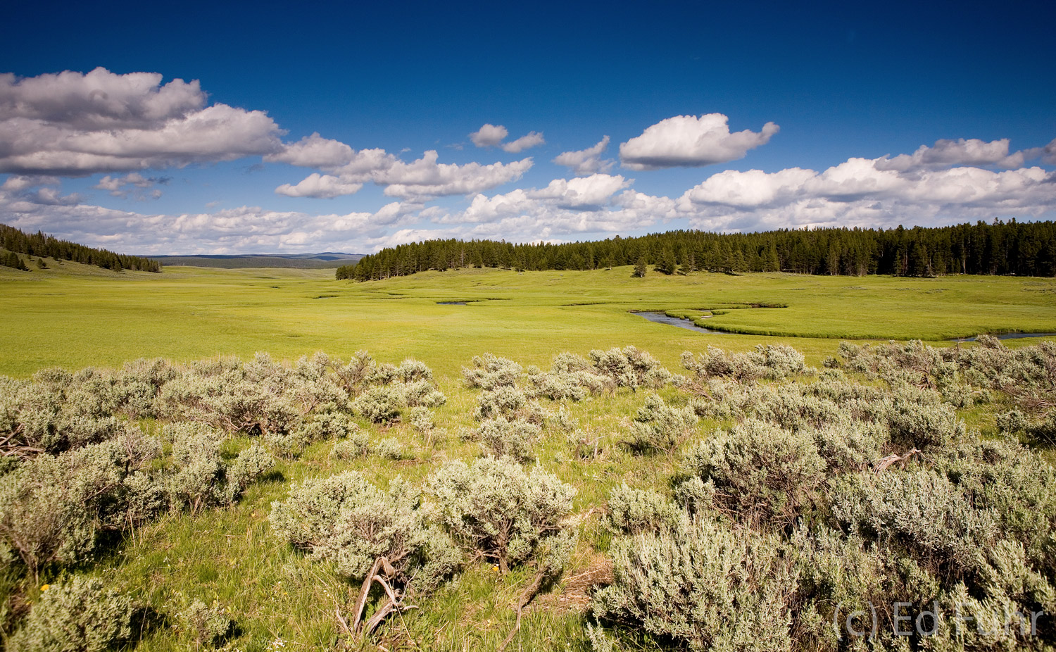 The wide Hayden Valley supports one of the most diverse animal kingdoms.