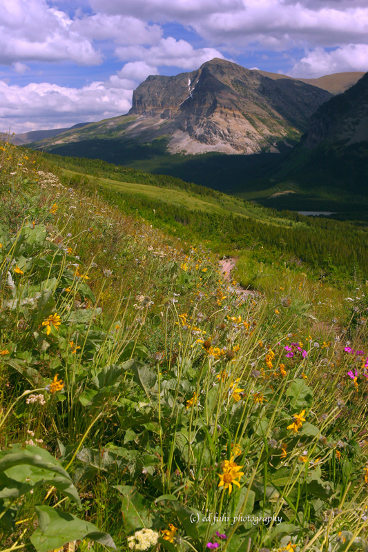 hike, trail, swiftcurrent, glacier, photo