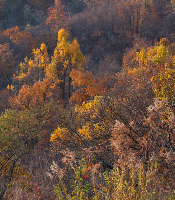 shenandoah, autumn, photo, photograph, , photo