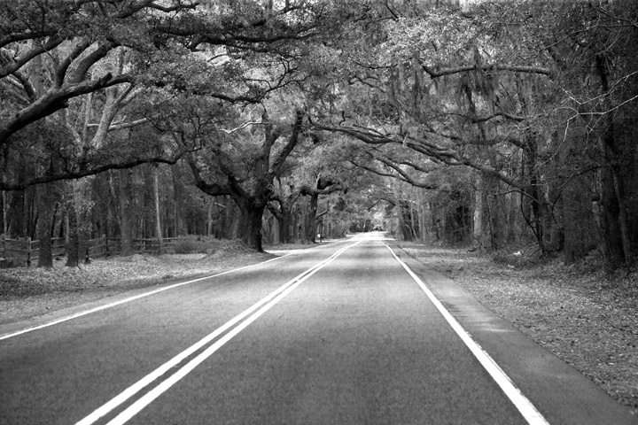 st. john's island, road, moss, oak, photo