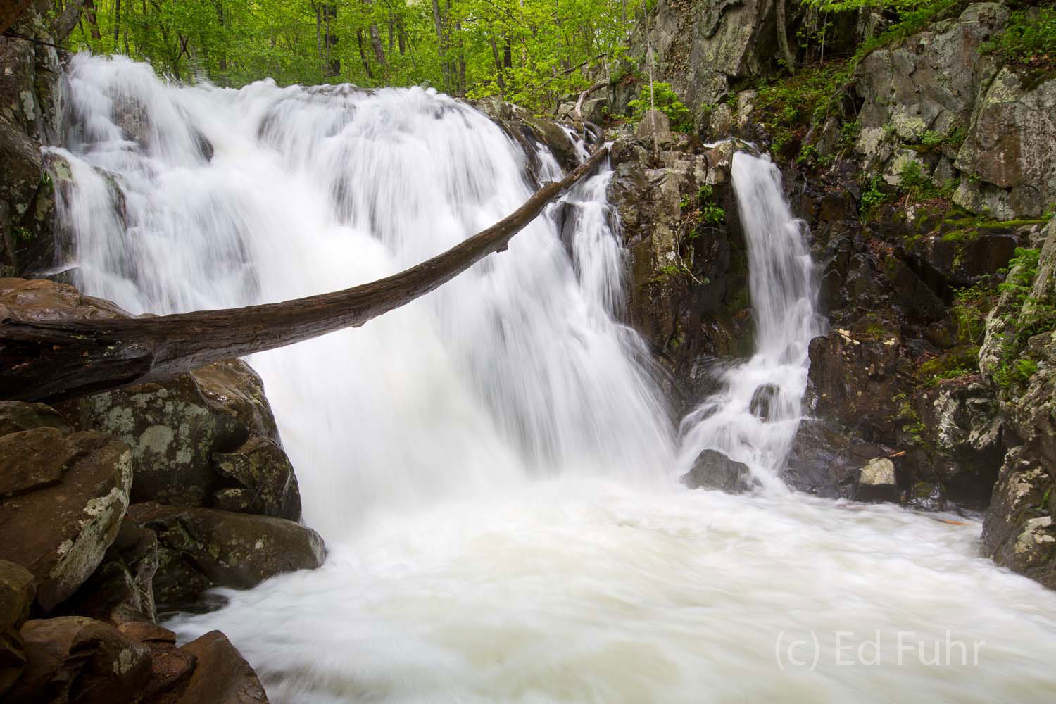 Swollen by days of exceptional rains, Rose River has become a deafening roaring waterfall in Shenandoah National Park.