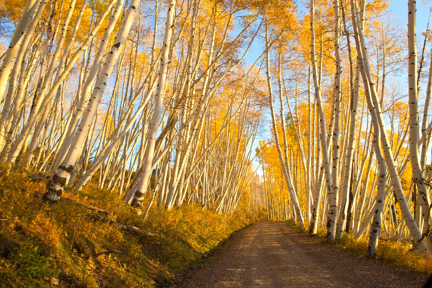 The sun was setting rapidly as I traveled down this dirt road. The aspens seemed to glow as if on fire and leaned ever...
