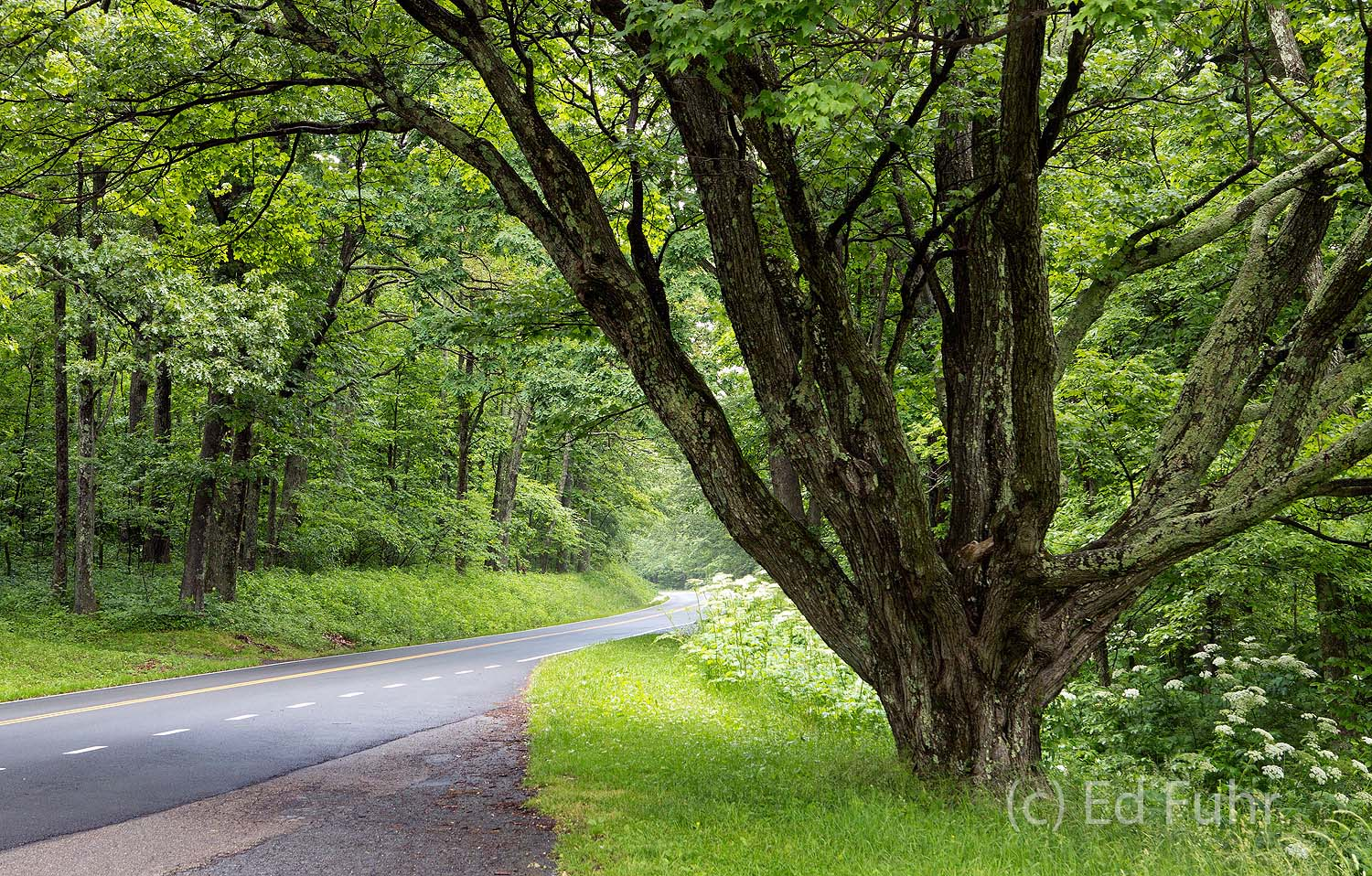photos, photographs, images, shenandoah, shenandoah national park, spring, waterfalls, , photo