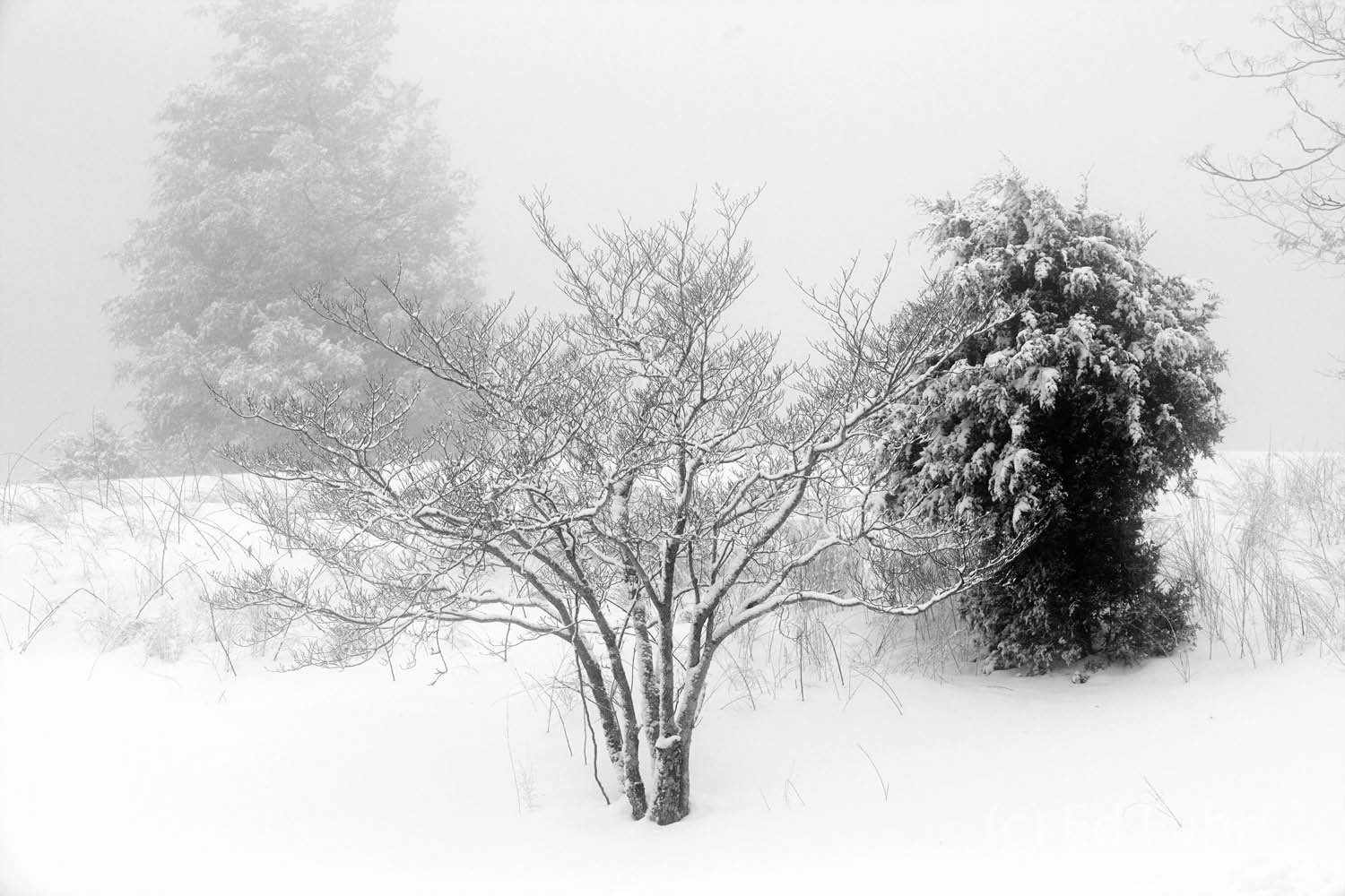This one is for an old friend.   In the clarity of winter, a sense of balance among the contrasting forms.