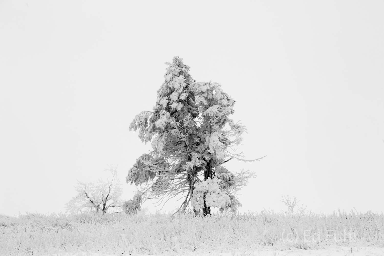 Shenandoah, Shenandoah National Park, photo, photography, images, mountains, wilderness, Virginia, winter, snow, photo