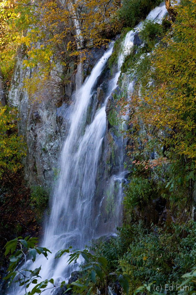 Fall rains have brought new energy and exuberance to the 70 foot Lewis Springs Falls