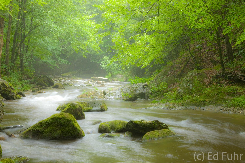 Little River, fog, photo