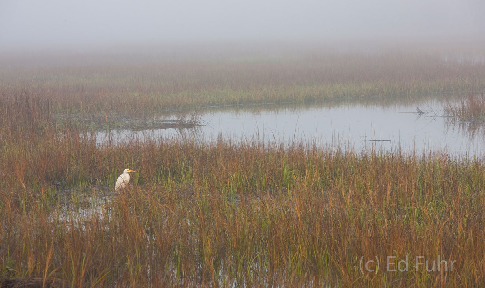 kiawah island, south carolina, low country, beach, photography, image