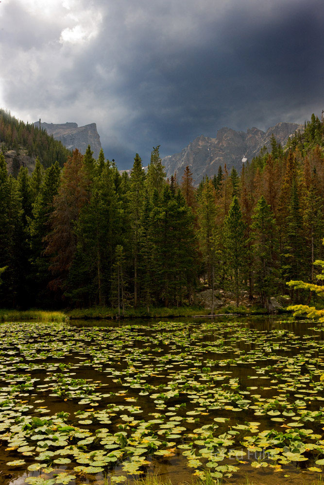 nymph lake, rmnp, colorado, pond lily, longs peak, hallet peak, colorado, photo
