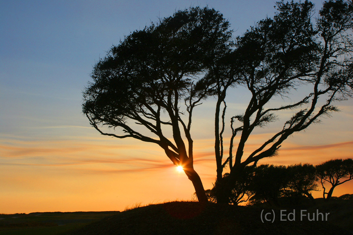 A palmetto tree is silhouetted by the setting sun on the Ocean Course.