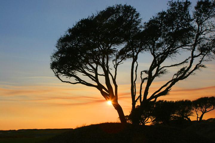 kiawah, ocean course, palmetto tree, photo