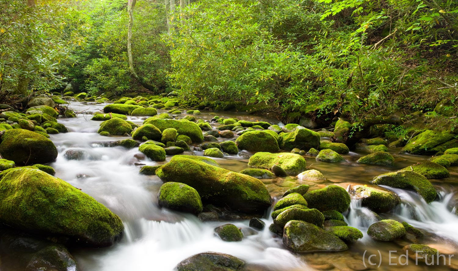 Roaring fork spring great smoky mountains np ed fuhr for Roaring fork smoky mountains