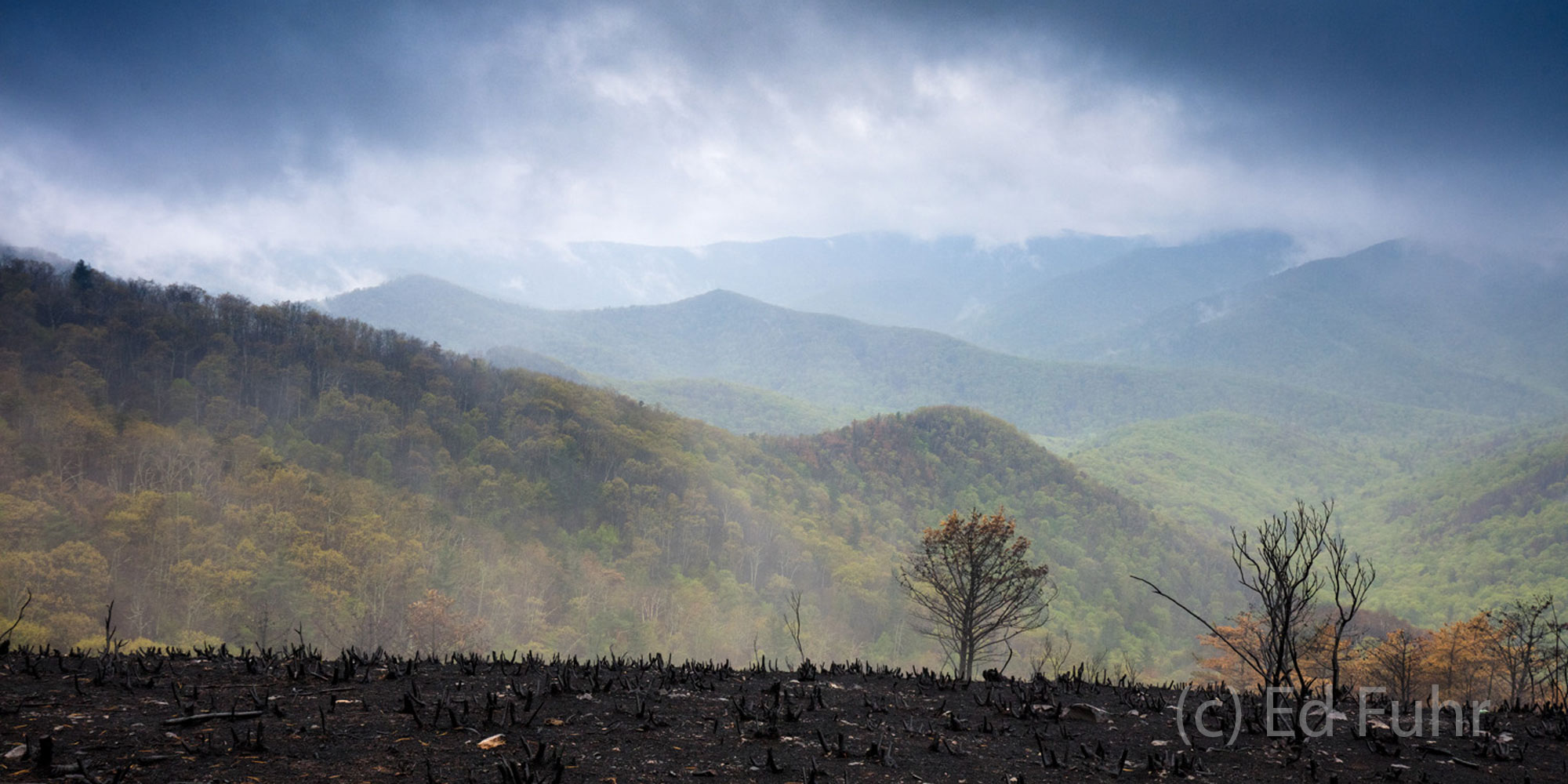 After the Rocky Mount fire has long been extenuished, springs green emerges through the fog, contrasting with the eery black...