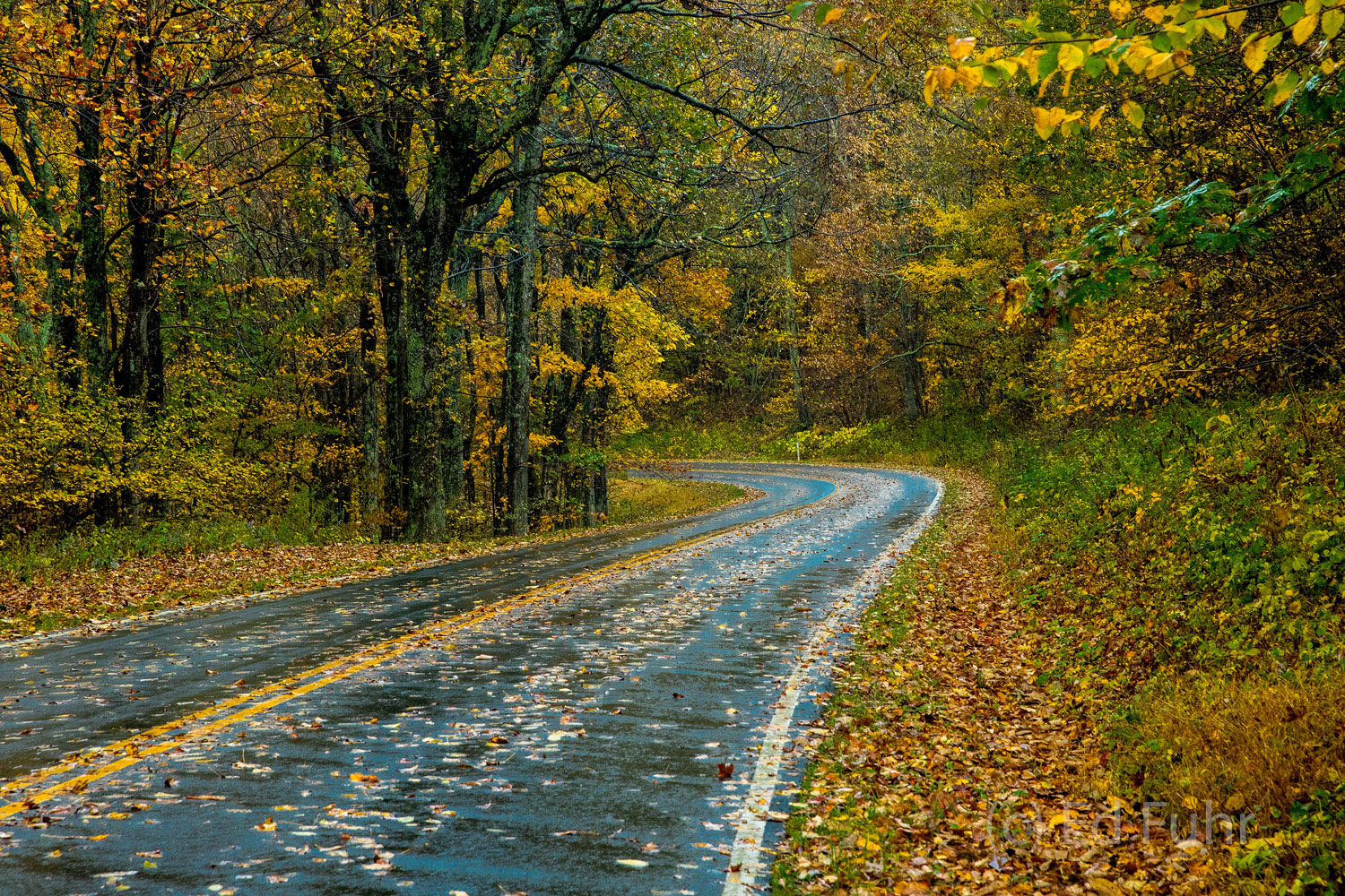 On a wet day, Skyline Drive glistens and the colors of fall dazzle.