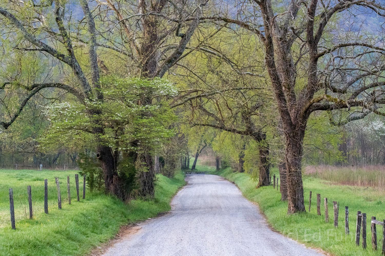 Sparks Lane in spring.