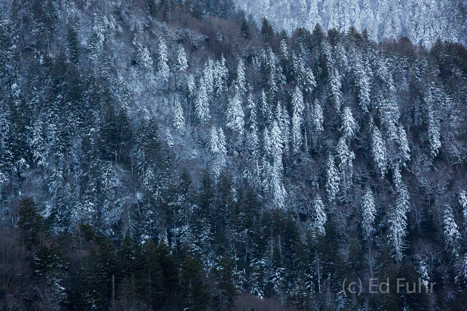 Great smoky mountains, spring, photography, images, snow, photo