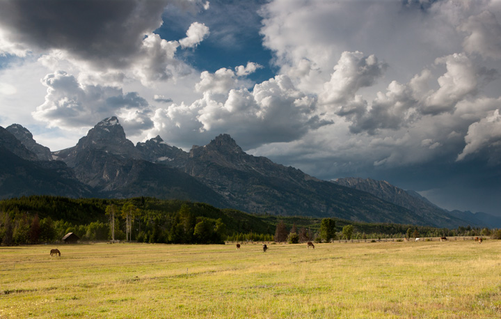 horse, field, tetons, thunderstorm, photo