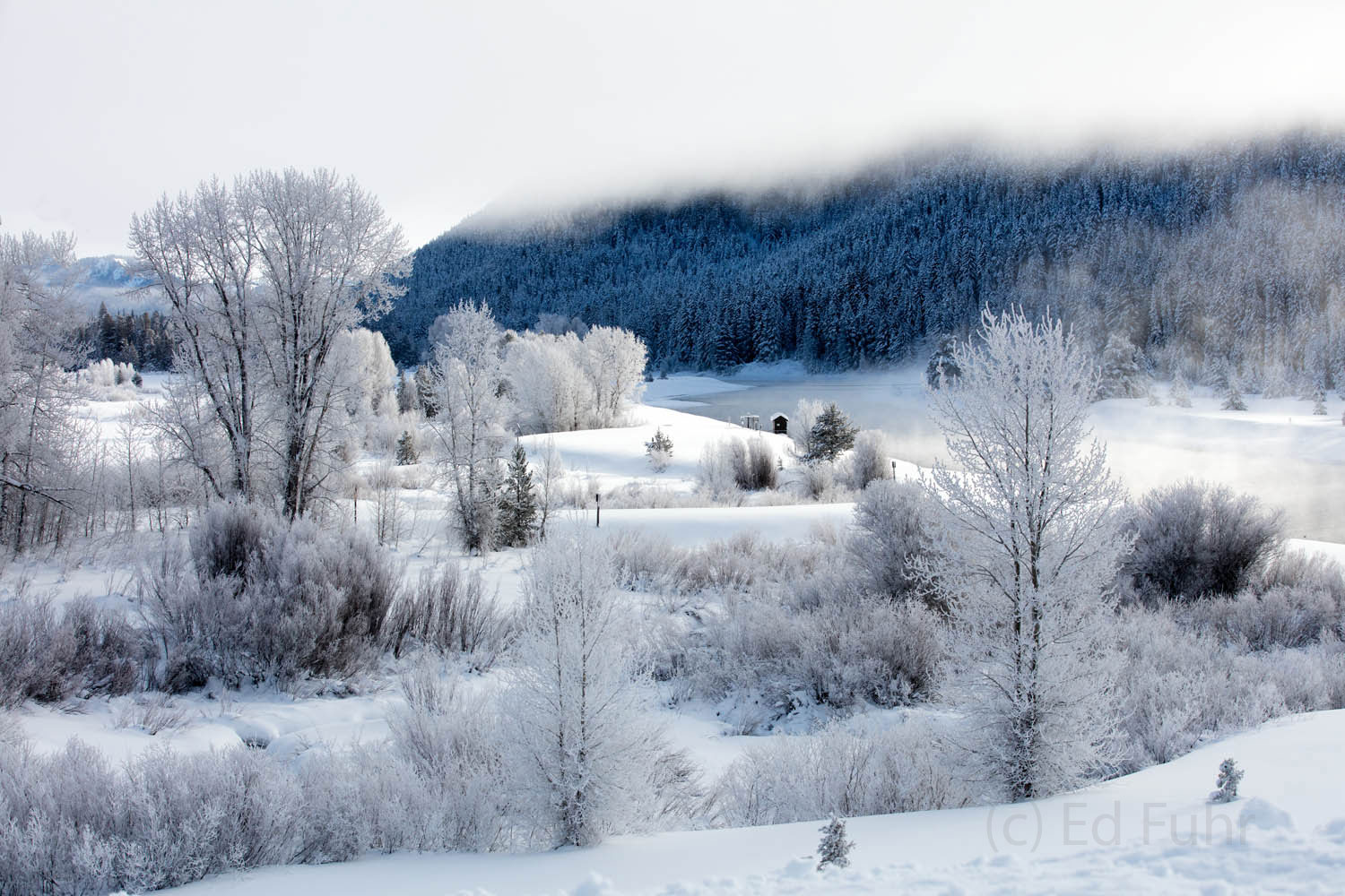 hoarfrost, snake river, jackson lake, cottonwood, photo