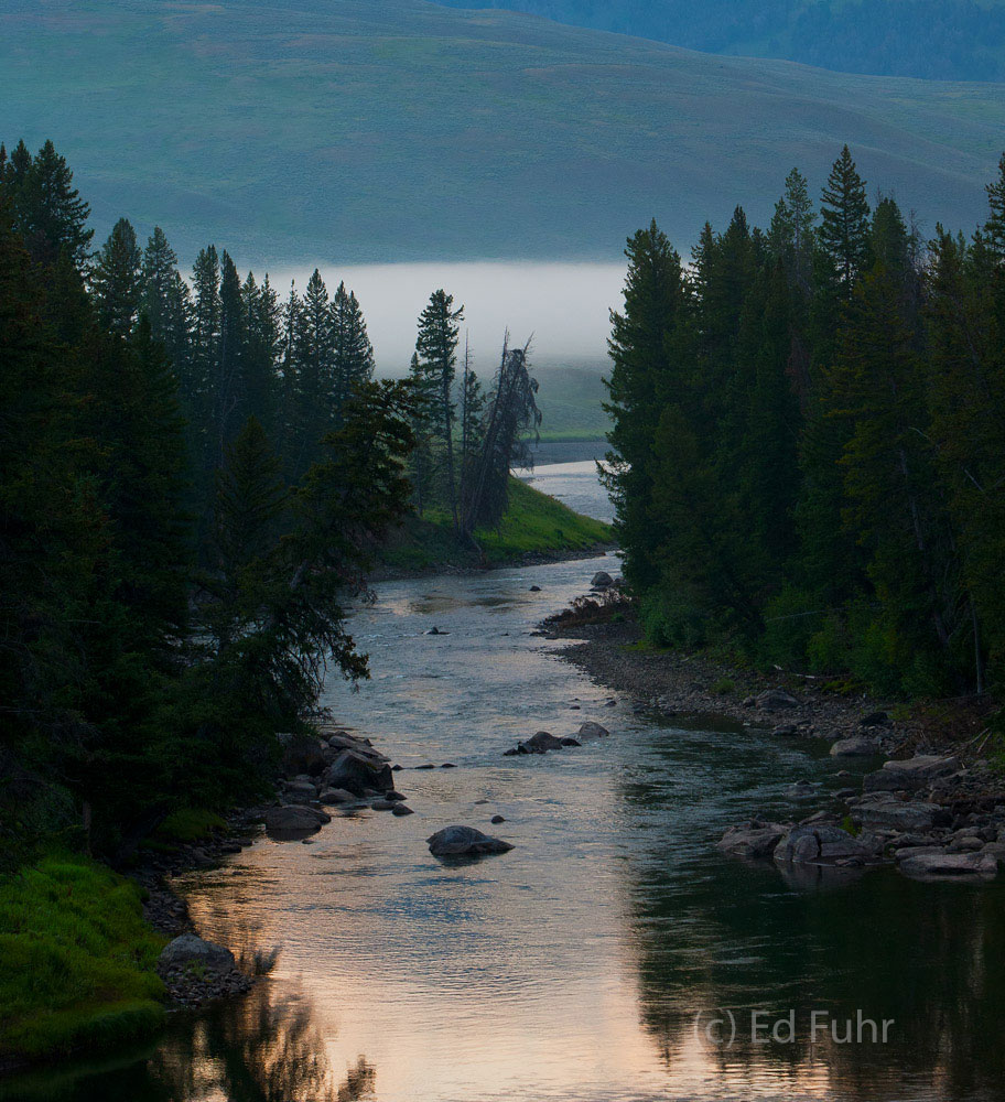 Nourished by several streams and creeks the Lamar Valley teems with wildlife.