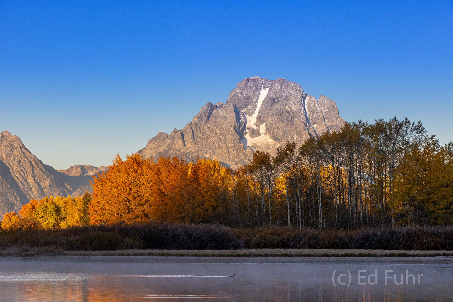 A  Canadian goose swims alone in the shadows of Oxbow Bend.  Fall's peak has come and gone and in a few days, most of the remaining...