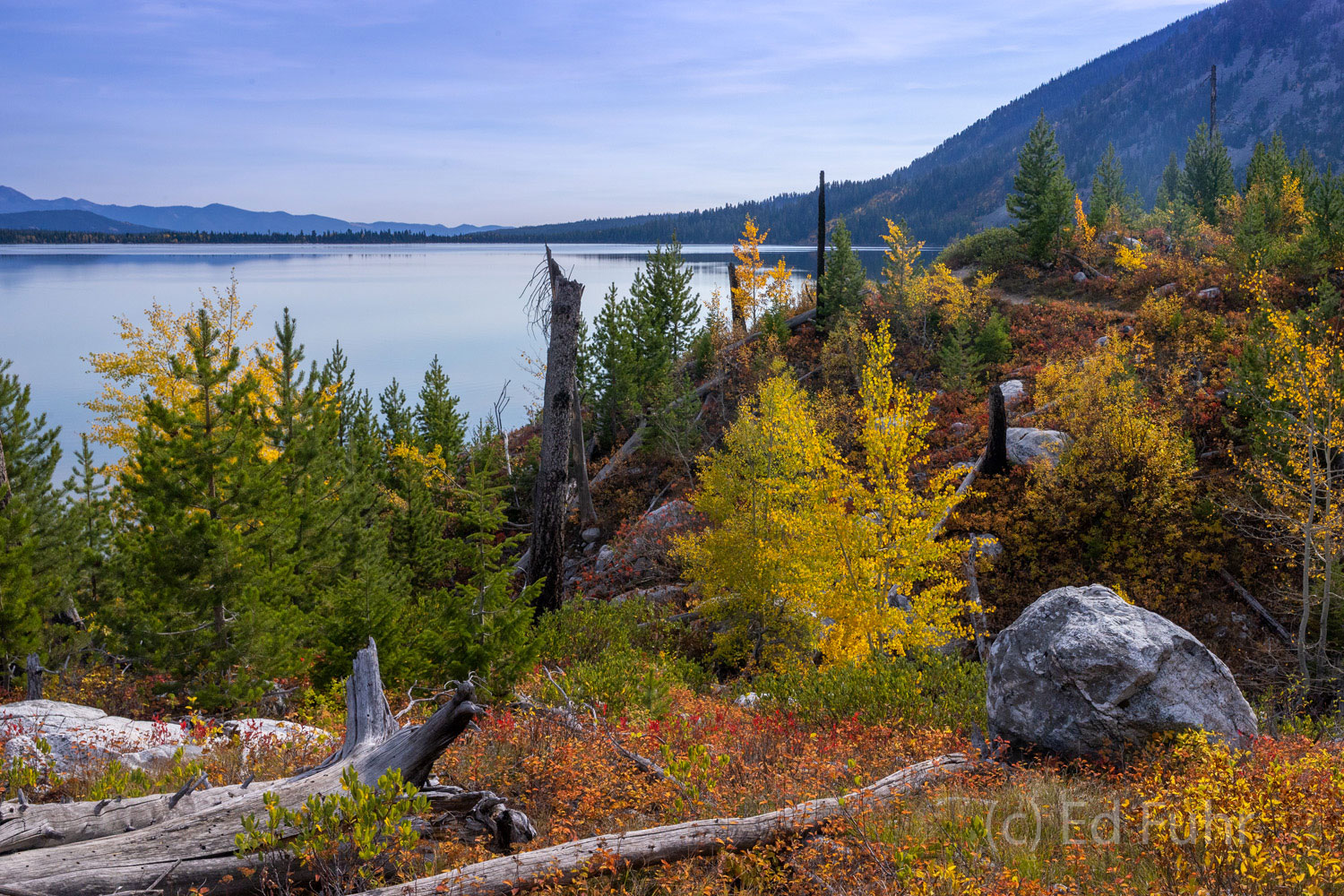 Enroute to Cascade canyon, the trail swings by the colorful berry bushes along the always scenic Jenny Lake.