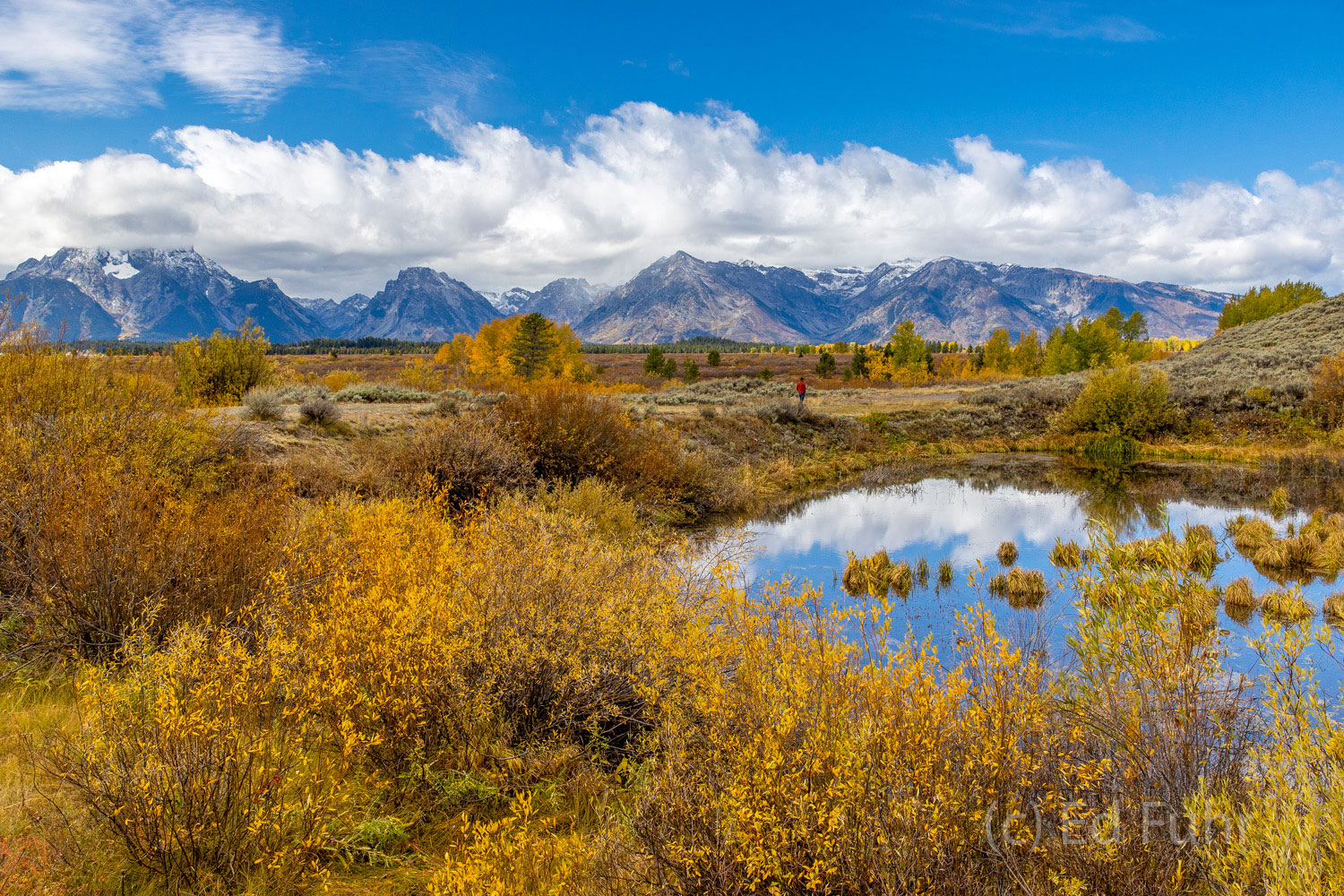 """Surrounded by fall's aspen, a pond reflects in Willow Flats.  Aptly named, this """"Moose Pond"""" frequently home to moose."""