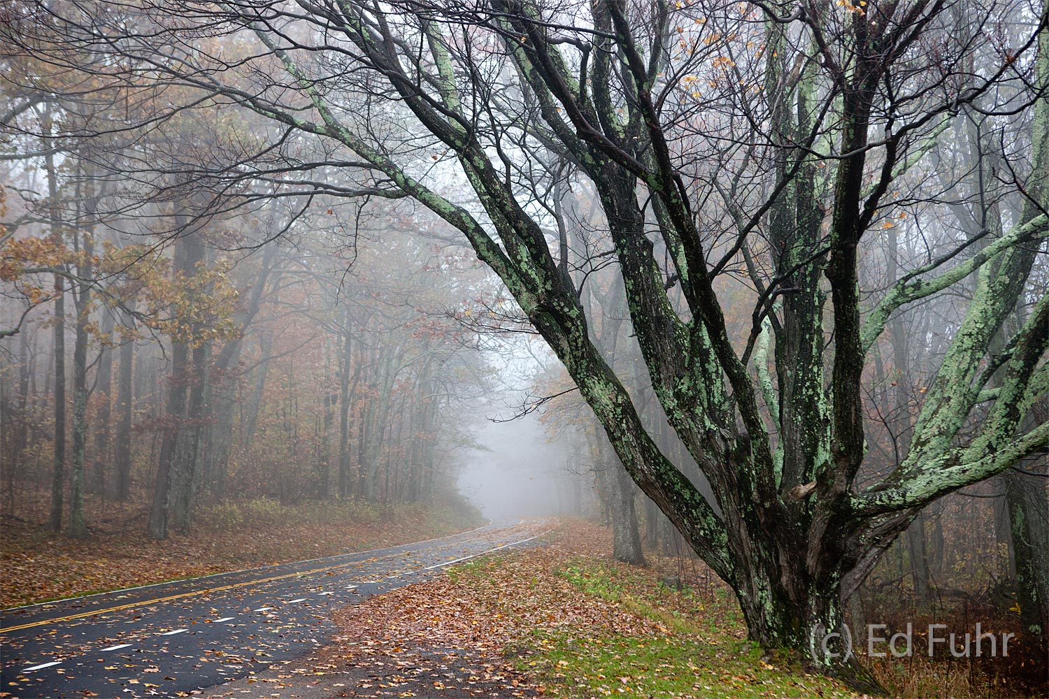 Shenandoah, Shenandoah National Park, photo, photography, images, mountains, wilderness, Virginia, Skyline Drive, road, fall, autumn, foliage, color, photo