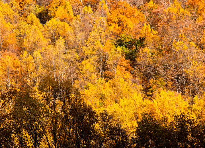 shenandoah national park, autumn, yellow, photo