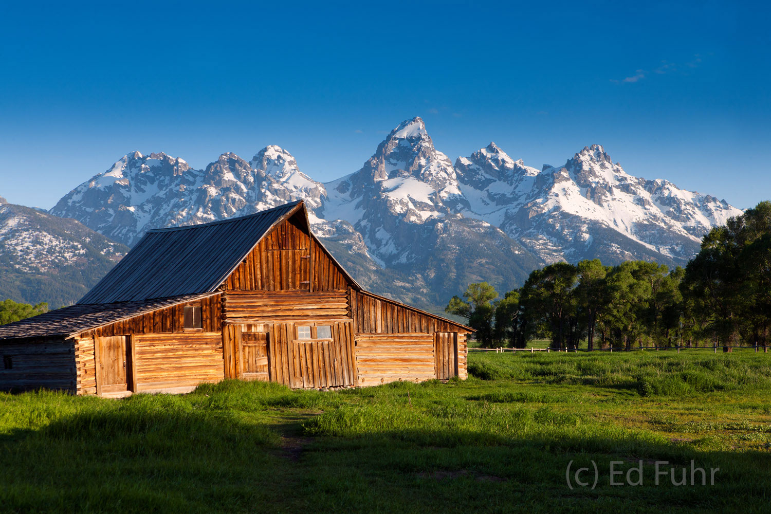 Snow capped peaks rise in the distance behind Moulton Barn on a glorious early summer morning.